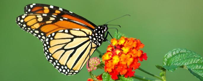 снимка: gaiadergi.com