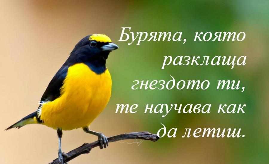 снимка за фон: emaze.com