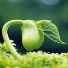снимка: Paperhi.com