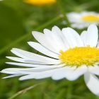 снимка: Pixabay.com
