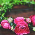 снимка: calierose.com