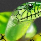 снимка: franhomesa.com
