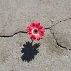 снимка: halfguarded.com