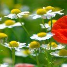Снимка: socwall.com