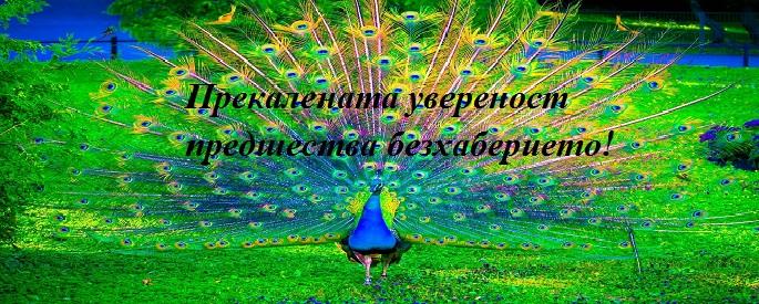 снимка за фон: plantacjapozytywnychmysli.blogspot.bg