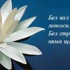 снимка: omartasatt.ru