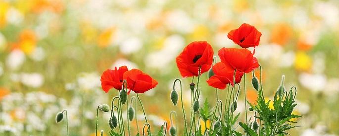 снимка: allswalls.com