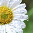 снимка: wpnature.com