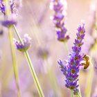 снимка: superiorwallpapers.com