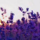 снимка: pcwallart.com