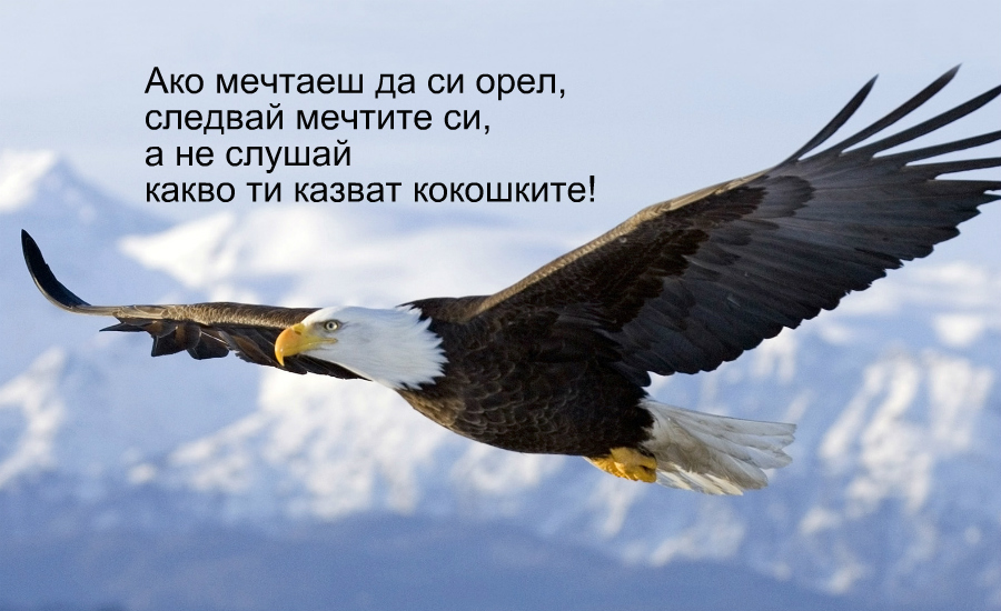 Ако мечтаеш да си орел, следвай мечтите си, а не слушай какво ти казват кокошките