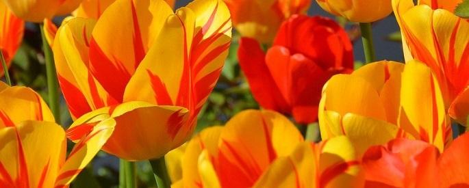 снимка: sirabee.com