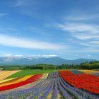 снимка: wallpaperscraft.com